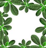foliage border background