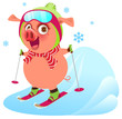 Pink funny merry pig symbol 2019 year skiing ski