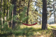 Hammock in the woods - 225618151