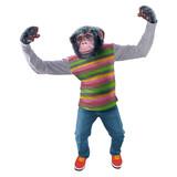chimpanzé, singe, jeune, animal, habillé en homme, debout, souriant, démonstration de force, réussite,