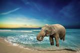 Elephant in Ocean