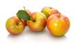 Äpfel Sorte Wellant reif mit Blatt weiß isoliert