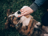 Woman with red nails, playing with her dog. Playful young dog at garden.