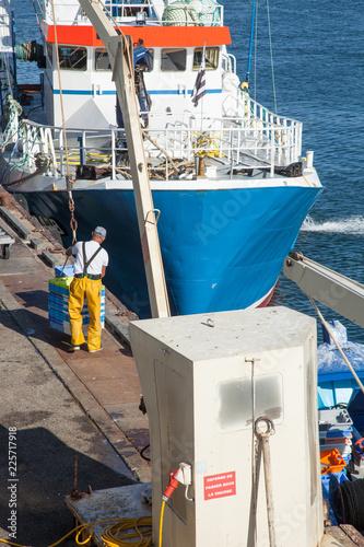 Fototapeta Déchargement d'un bateau de pêche dans le port du Guilvinec (Finistère)