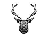 Hand Drawn of Deer Head with Horn Sign Symbol Vintage Logo Vector - 225720556
