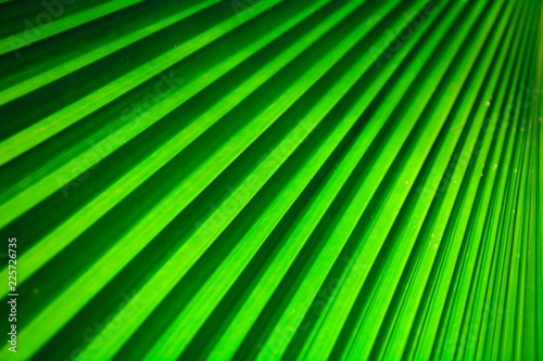 texture of a green palm leaves. - background. - 225726735