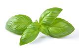 liść bazylii - 225729972