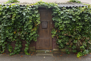 Wooden brown door with a lock. Around is a lot of greenery. Cloudy weather