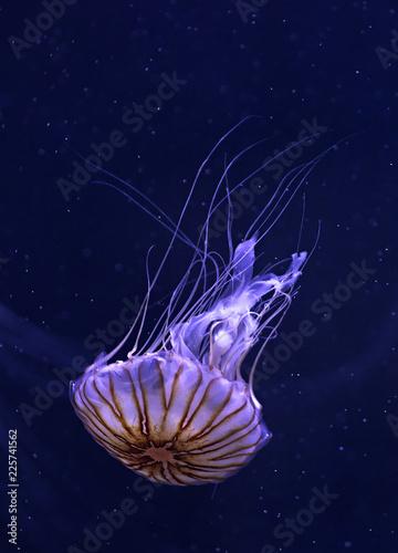 Fototapeta Qualle Meer Aquarium Tiere Sea