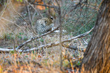 Leopard Krüger National Park Südafrika