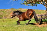 Horse frolics on the lawn with green grass. - 225757764