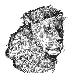 Realistic portrait of African animal Lion. Vintage engraving. Black and white hand drawing. Vector