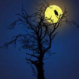 owl in front of moon