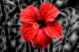 Fundo com flor com efeito de fractal
