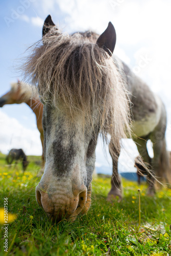 Horse in the italian alps
