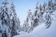 Leinwandbild Motiv Christmas view with spruce forest in the snow