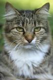 cutr striped wild cat