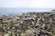 Whitley Bay Rocks  - 225833138