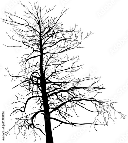 old large bare isolated tree black silhouette - 225837116