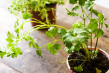 Pots with parsley on wooden table   - 225844584