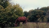 horse and foal graze in the forest - 225857392