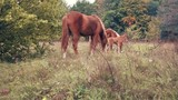 herd of horses grazing in the forest - 225857952