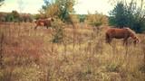 herd of horses grazing - 225858799