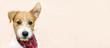 Leinwandbild Motiv Funny cute pet dog puppy listening with ear - web banner with copy space