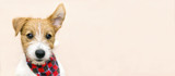 Funny cute pet dog puppy listening with ear - web banner with copy space - 225867902