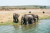Elefanti al Kazinga Channel, Uganda, Africa