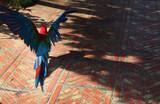 Parakeet takeoff