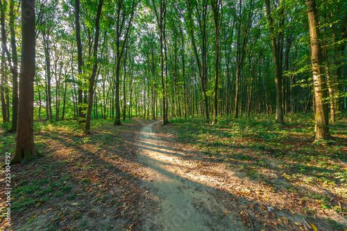 Foto Murales beautiful green forest