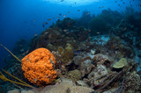 Barrel sponge on coral reef at Bonaire Island in the Caribbean