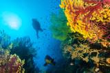 paysage plongeur et mérou