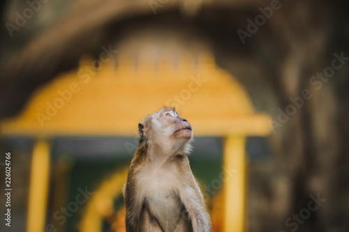 Fototapeta Affe auf Felsen, Höhle