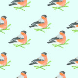 Bullfinch siting on spruce branches. Watercolor illustration. Light colors. Blue backround. Side view. Seamless pattern.