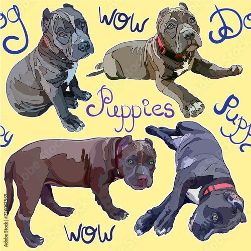 obraz lub plakat Seamless background with pitbulls