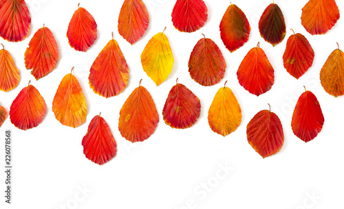 Herbstblätter - 226078568