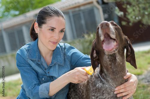 Leinwandbild Motiv female vet stroking dog at animal shelter