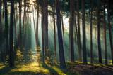 Fototapeta Fototapety – krajobraz polskiej wsi - Sonnenstrahlen im Wald am Morgen im Herbst © kentauros