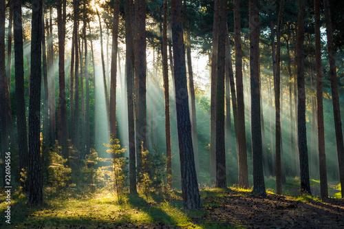 canvas print picture Sonnenstrahlen im Wald am Morgen im Herbst