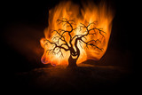 Silhouette of scary Halloween tree with horror face on dark foggy toned fire. Scary horror tree Halloween concept.