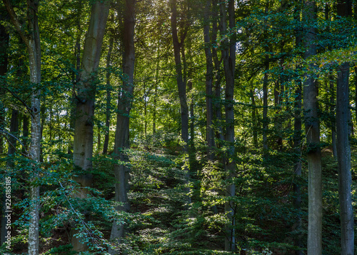 dense forest with sun rays shining through - 226185185