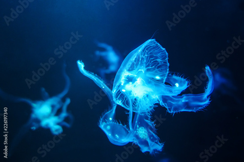 Fototapeta Jellyfish background