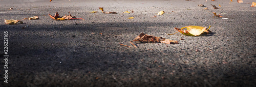 Yellow, autumn leaves on the pavement. Autumn cover background. - 226221165
