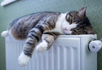 Striped pet cat lying on warm radiator rests and relaxes