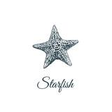 Starfish  skech. Starfish hand drawing