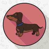 Button with Cute Dachshund in Flat Style and Long Shadow, Vector Illustration