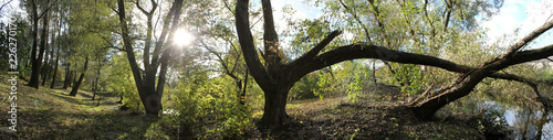 Panoramic view of old park with large deciduous trees. Early autumn landscape - 226270170