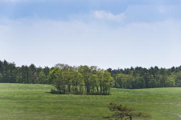 高原の牧草地の新緑に包まれた林